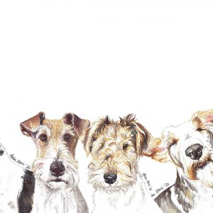 liveWire Fox Terriers