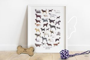 Native Vulnerable Dog Breeds of the UK Poster Print