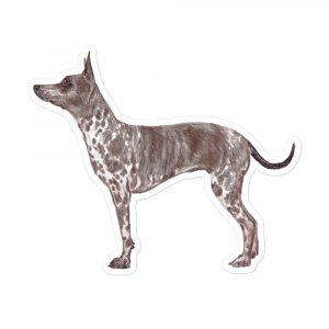 American Hairless Terrier – Stickers