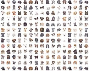 Most Pupular Design – Digital Gift Voucher