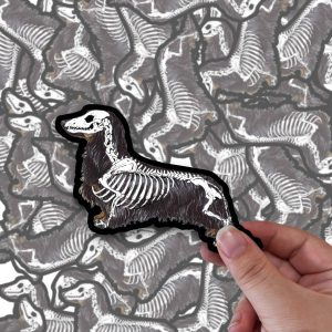 Dachshund (Long Haired) – Skeleton – Stickers
